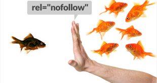 لینک های نوفالو چیست؟