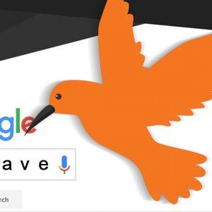 الگوریتم مرغ مگس خوار گوگل چیست؟